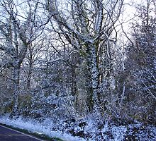 Snow trees by brucemlong