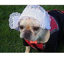 Dutch Dog Photographic Print