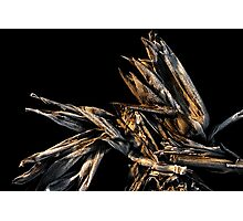Frosted Corn Husk Photographic Print