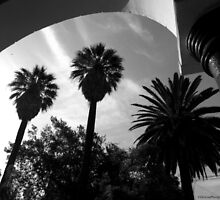 Palm Arch by Helicon