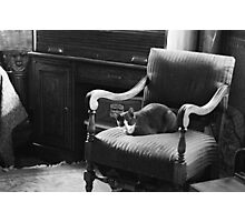 Chair Cat Photographic Print