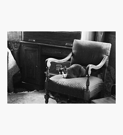 Chair Cat Photographic Print