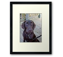 A Chocolate Lab Framed Print