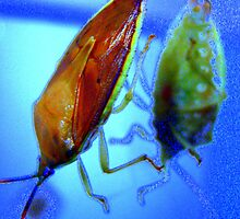 Stink Bug Blues by Katewah