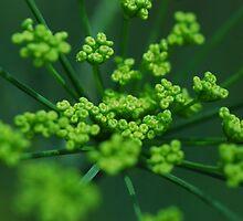 Green by Mark  Seguerra