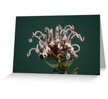 Grey Spider Flower Greeting Card