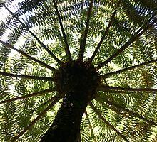 Tree Fern Silhouette by Erland Howden