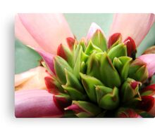 tropical flowers series - pink and green up-close Canvas Print
