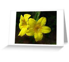 Carolina Yellow Jessamine (Gelsemium sempervirens) Greeting Card