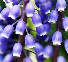 Blue Bells by Kathleen Struckle