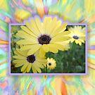 Yellow Daisy Card by picketty