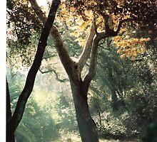 Early Morning Sun by AmyAutumn