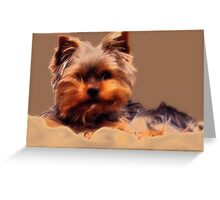 Yorkshire Terrier - Diffuse Glow Greeting Card