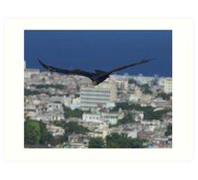Cuban Turkey Vulture Art Print