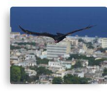 Cuban Turkey Vulture Canvas Print