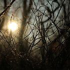 Morning Shadows by AbigailJoy