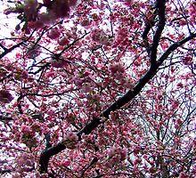 Blossom sky by TriciaDanby