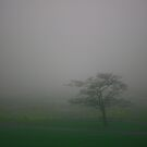 Misty Tree by Robin D. Overacre