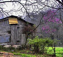 spring splendor by budrfli