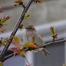 Bird by Sorin  Reck