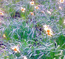 flowers in sheffield by hmmmbates