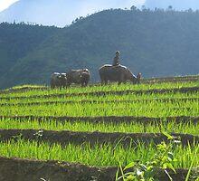 Sapa Vietnam by Arno Wentink