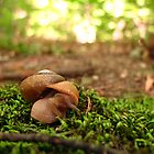 .snail's pace. by foozma73