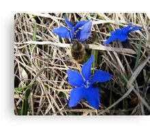 BLUE FLOWER AND INSECT Canvas Print