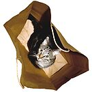 Cat In a Bag Looking Concerned by Mark Ross