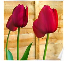 Red Tulips ..  Poster