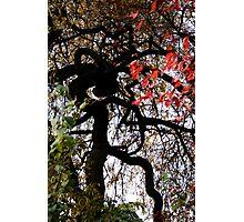 Multi Coloured Tree Photographic Print