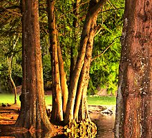 Everglades by Varinia   - Globalphotos