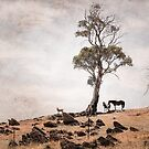 Tree in field with horses and sheep by Manfred Belau