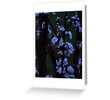 Nightfall Blossoms Greeting Card