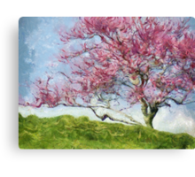 Pink Flowering Tree Canvas Print