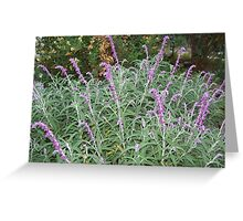Purple stalks Greeting Card
