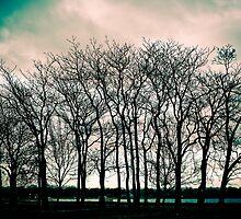 Bare Trees by rafaj