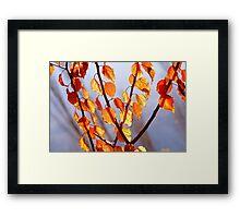 DSC_3504_nx_ld4f---hr::DSC_3103_nx_ld3 Framed Print