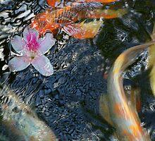 High Gloss Koi by tserio