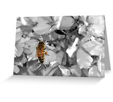 Welcome Bees! Greeting Card