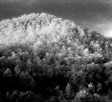 Big hill little trees............daniland  by Juilee  Pryor