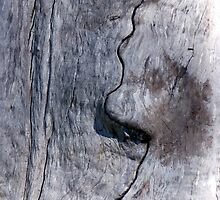 Profile in Wood by Shelley Heath