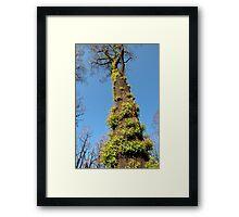 Bushfire Eucalyptus  Framed Print