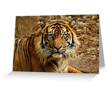 Sumatran Tiger II Greeting Card