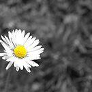 Daisy daisy..... by marshy69