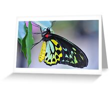 Butterfly Cairns Birdwing III Greeting Card