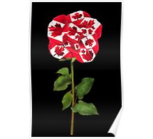 இڿڰۣ-ڰۣ— CANADIAN PATRIOTIC ROSE PICTURE/CARD இڿڰۣ-ڰۣ— Poster