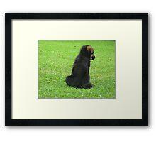 GERMAN SHEPERD PUPPY Framed Print