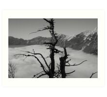 A Twig Above the Clouds Art Print
