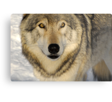 The Magnificent Stare Metal Print